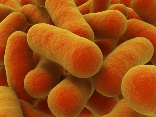 bakterioterapia-fekalna